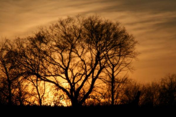 {29/365} January 29  Winter Sunset