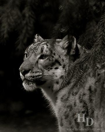 Rare sighting at the woodland park zoo.