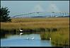 (14Apr10)<br /> <br /> sidney lanier bridge, marshes of glynn, egrets and ibis.<br /> <br /> f/11, 1/500s, iso 400.