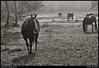 "(28Aug10)  little creek horse farm.  <a href=""http://carpelumen.smugmug.com/Photography/2009/August09/9164901_7b3Yf/1/633090649_p4bET/Medium"">one year ago.</a>  f/11, 1/200s, iso 200."