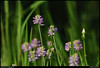 "(11Aug10)  wildflowers, arabia mountain.  <a href=""http://carpelumen.smugmug.com/Photography/2009/August09/9164901_7b3Yf/1/618342414_p5Qfy/Medium"">one year ago.</a>  f/8, 1/1250s, iso 640."
