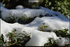 "28Dec10  lingering snow.  <a href=""http://carpelumen.smugmug.com/Photography/2009/December09/10558596_ZYY3B/1/753536086_hT3My/Medium"">one year ago.</a>  f/11, 1/100s, iso 100."