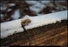 (15Jan10)<br /> <br /> ridge of snow.<br /> <br /> f/4.5, 1/800s, iso 800.