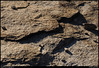 "(5Jan10)  layered gneiss.  <a href=""http://carpelumen.smugmug.com/Photography/2009/January09/6990891_V8LMY/1/449681975_f3TWf/Medium"">one year ago.</a>  f/11, 1/800s, iso 800."