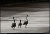 "28Jul10  family stroll in the morning light.  <a href=""http://carpelumen.smugmug.com/Photography/2009/July09/8770350_aJEzR/1/604816930_nqW3T/Medium"">one year ago.</a>  f/11, 1/320s, iso 800."