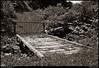 """(23Jun10)  appalachian driveway.  <a href=""""http://carpelumen.smugmug.com/Photography/2009/June09/8392149_Xn7yQ/1/580494367_54yV6/Medium"""">one year ago.</a>  f/16, 1/250s, iso 400."""