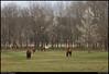 "25Mar10  little creek horse farm.  brief stop on my way to work.  <a href=""http://carpelumen.smugmug.com/Photography/2009/March09/7477799_WHuqw/1/499095492_TQmGM/Medium"">one year ago.</a>  f/8, 1/100s, iso 640."