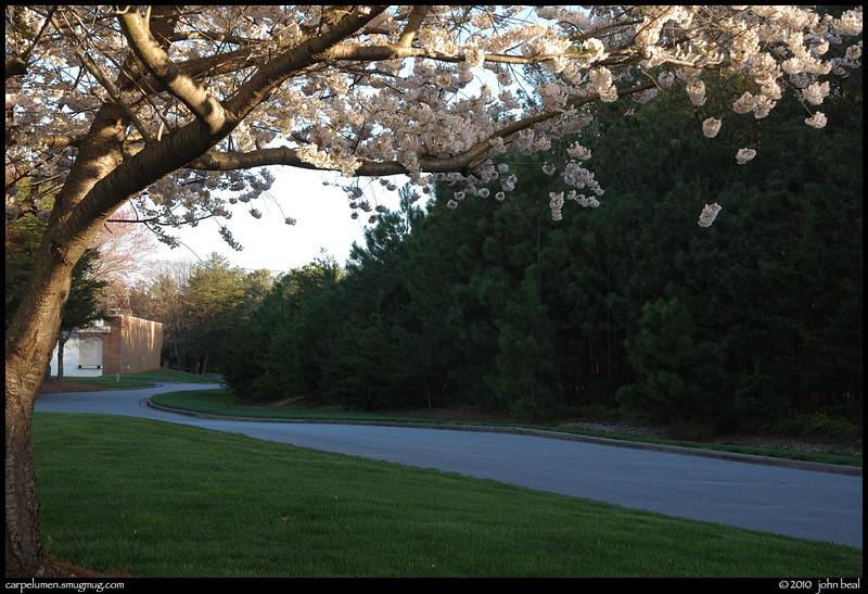 "(31Mar10)  same tree as yesterday, same curve <a href=""http://carpelumen.smugmug.com/Photography/2010/February10/11223017_NXk2m/1/788178592_323MY/Medium"">last seen in snowfall.</a>  f/8, 1/200s, iso 400."