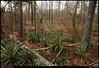 """(16Mar10)  woods at arabia mountain, georgia.  <a href=""""http://carpelumen.smugmug.com/Photography/2009/March09/7477799_WHuqw/1/492549316_zw9u7/Medium"""">one year ago.</a>  f/8, 1/50s, iso 1250."""