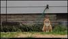 """(26Mar10)  neighborhood watch.  <a href=""""http://carpelumen.smugmug.com/Photography/2009/March09/7477799_WHuqw/1/499635225_vgWvf/Medium"""">one year ago.</a>  f/8, 1/50s, iso 640."""
