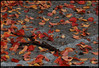 24Nov10<br /> <br /> crape myrtle leaves and bark.<br /> <br /> f/11, 1/250s, iso 800.