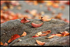 (22Nov10)<br /> <br /> fallen leaves.<br /> <br /> f/11, 1/320s, iso 800.