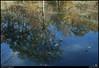 "13Nov10  autumn reflection in sweetwater creek.  <a href=""http://carpelumen.smugmug.com/Photography/2009/November09/10158540_QLM7i/1/714193666_QY8qR/Medium"">one year ago.</a>  f/11, 1/30s, iso 200."