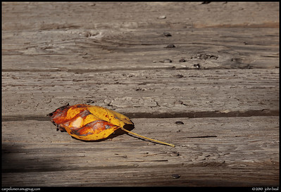 (7Nov10)  autumn leaf on weathered wood.  f/11, 1/640s, iso 400.