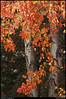 (21Nov10)<br /> <br /> more autumn colors.<br /> <br /> f/11, 1/250s, iso 800.