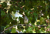 "(26Oct10)  mockingbird w/ berry, panola mountain state park.  <a href=""http://carpelumen.smugmug.com/Photography/2009/October09/9832432_QGQQM/1/696033965_2Yemy/Medium"">one year ago.</a>  f/10, 1/160s, iso 800."