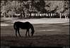 "(10Oct10)  morning grazing.  <a href=""http://carpelumen.smugmug.com/Photography/2009/October09/9832432_QGQQM/2/676906495_GPs64/Medium"">one year ago.</a>  f/8, 1/500s, iso 800."