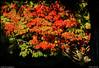 "13Oct10  framed fall foliage.  <a href=""http://carpelumen.smugmug.com/Photography/2009/October09/9832432_QGQQM/2/680256712_m6fJB/Medium"">one year ago.</a>  f/8, 1/500s, iso 640."