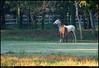 "29Sep10  morning squabble, little creek horse farm.  <a href=""http://carpelumen.smugmug.com/Photography/2009/September09/9510900_G8X5n/1/666421527_PxVMU/Medium"">one year ago.</a>  f/8, 1/125s, iso 800."