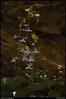 "(16Sep10)  riverside flowers.  <a href=""http://carpelumen.smugmug.com/Photography/2009/September09/9510900_G8X5n/1/657049603_6PVdn/Medium"">one year ago.</a>  f/8, 1/60s, iso 640."
