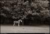monochrome: little creek horse farm, dekalb county parks, georgia.