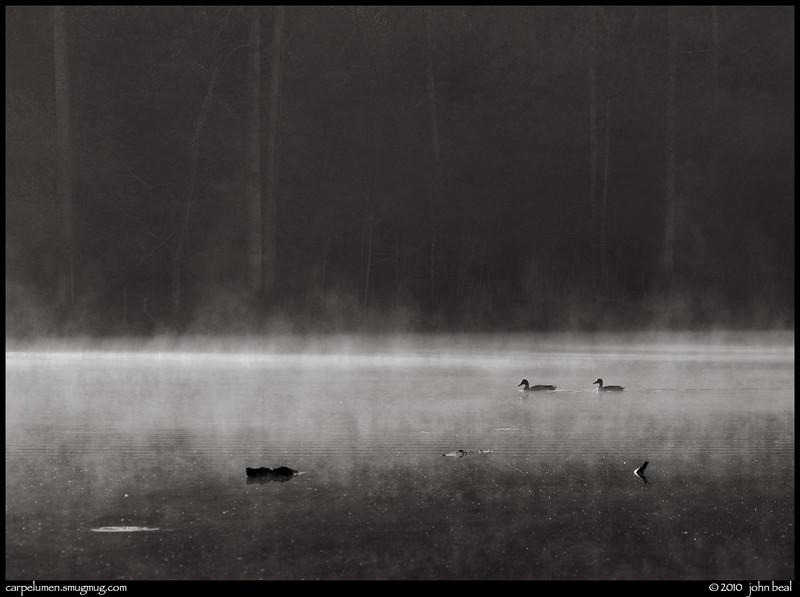 monochrome: ducks in the mist, arabia mountain, dekalb county parks, georgia.