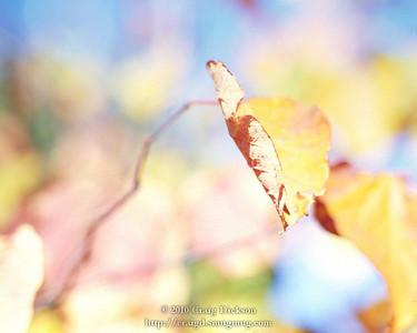 2010.11-12 Fall Colors