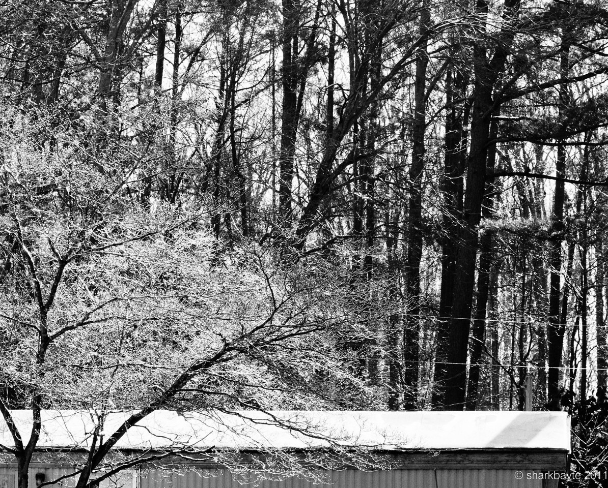 Remains of the storm. We got more ice than snow. I took this from my door, the ice was just starting to melt. And seeing its a new year I wanted to do more with b&w. So I converted it and played around with it. Not sure if it works ok in b&w.   Day 13:365 @sharkbayte
