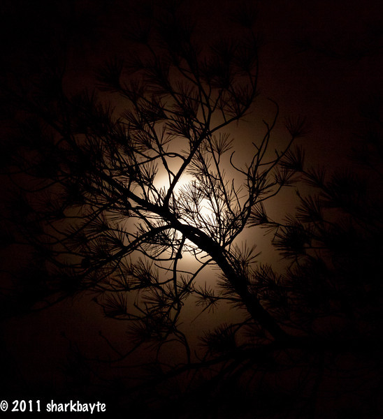 June 13, 2011-Moon lit branches. We had another t-storm, some heavy rain and strong wind. I wasn't going to try for a moon shot, but after hearing something hit my roof and then drop onto the ground. I went outside to investigate. It was a huge branch that the park manager was going to have removed because it was right over my roof. The noise from this branch was so loud my next-door neighbor came outside to see what had happened. The rain had stopped and i saw the moon peering through the tree branches. Thought it was pretty neat, even though it was very foggy. (Day 164:365 @sharkbayte)<br /> <br /> Thank you for all the comments on my deer shot yesterday. All our fine, but still no babies.