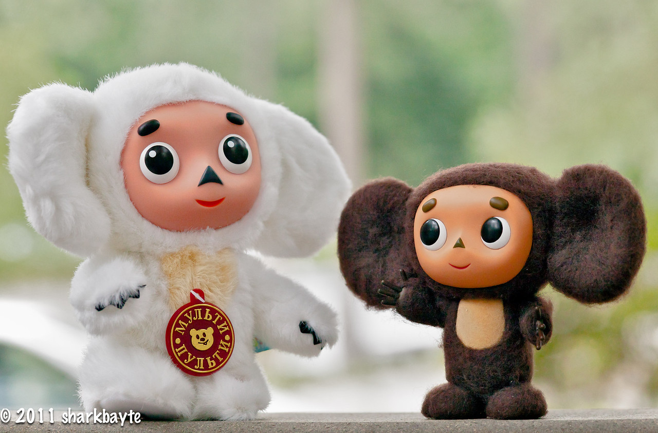 "June 16, 2011-What an awesome surprise we had today. Cheburashka's cousin ""The 2004 Russian Winter Olympic team mascot Cheburashka"" (yes same name, his parents named him first) arrived today via my awesome friends, Susan and Rustem a.k.a. RuSu (thank you!) What a fun day and night! Our newest member sang and danced with us for hours. I left everyone partying and wanted to post this before heading to bed!  Thank you all for your kind comments on my catnap photo yesterday! You all rock! (Day 167:365 @sharkbayte)"