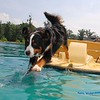 Toby taking the Plunge