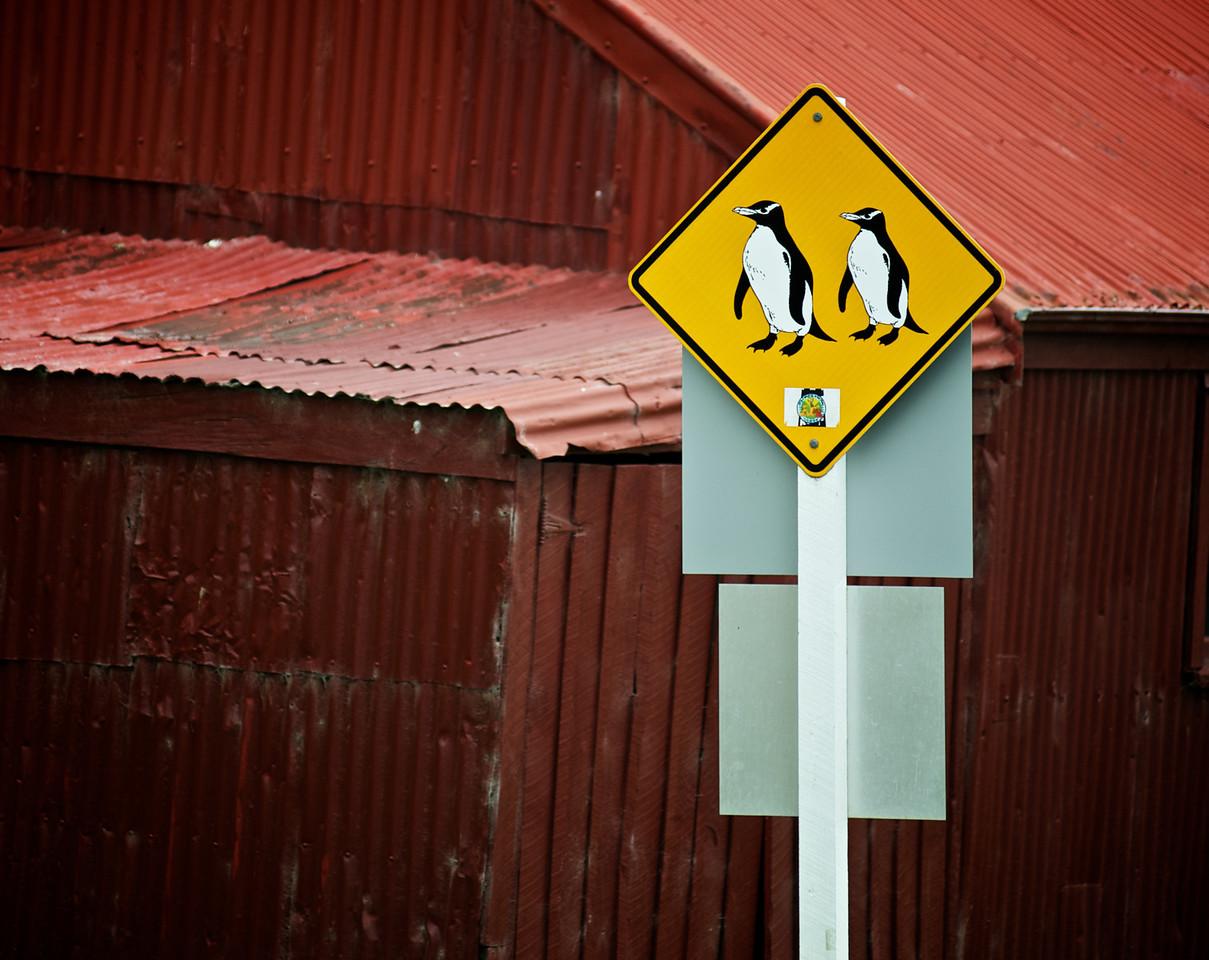 DunedinTrip_2011-10-30_12-27-17__DSC4479_©RichardLaing(2011)