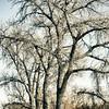2/19/11 in the Morgan Smith nature area outside Brighton, CO.