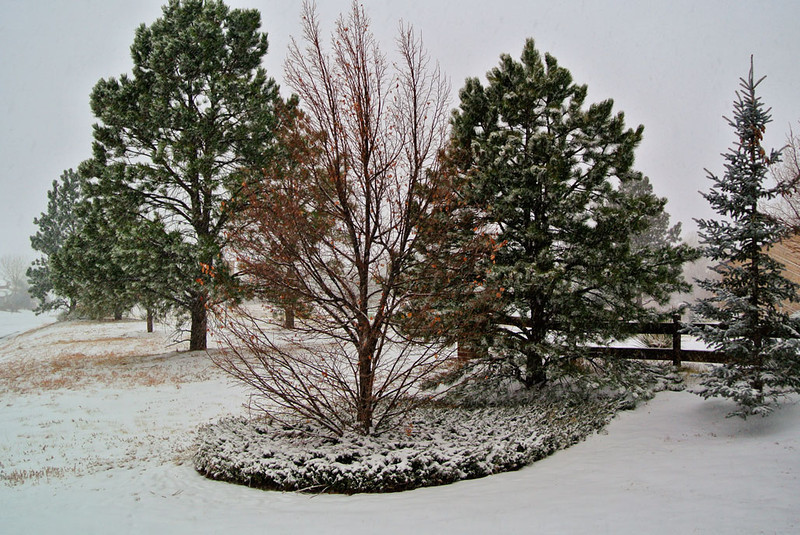12/1/11: View from Daisy Hill this AM, while testing white Nikon J1
