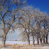 Landscape can be close to home, such as this one on Highway 7, near Brighton. 1/25/11.