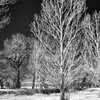 1/19/11. More snow expected today. Digital infrared shot made at Barr Lake state park.