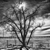 2/26/11: Created for upcoming Shutterbug review of Nik Silver Efex Pro.