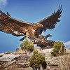 The sun is out and the snow is melting. Eagle sculpture at Prairie Center, Brighton, CO shot on 1/17/11 with Tamron's AF18-270mm f/3.5-6.3 Di II VC PZD lens and Canon EOS 50D