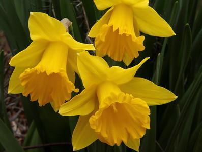 Flowers 2011