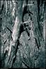 "(15Feb11)  supporting deadwood.  <a href=""http://carpelumen.smugmug.com/Photography/2010/February10/11223017_NXk2m/1/788875484_HtPiL/Medium"">one year ago.</a>  f/10, 1/640s, iso 640."
