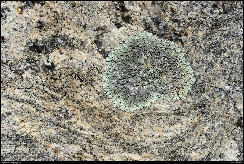 (31Jan11)<br /> <br /> lichen and gneiss veins, arabia mountain, georgia.<br /> <br /> f/22, 1/400s, iso 800.