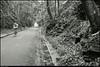 "18Jun11  along the silver comet trail, cobb county, georgia.  <a href=""http://carpelumen.smugmug.com/Photography/2010/June10/12412840_TbYsD/1/906221675_FUC9x/Medium"">one year ago.</a>  f/8, 1/10s, iso 400."