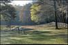 "18Mar11  morning sunlight in the spring foliage, little creek horse farm.  <a href=""http://carpelumen.smugmug.com/Photography/2010/March10/11394055_8VU6F/1/813745435_a8GBp/Medium"">one year ago.</a>  f/11, 1/160s, iso 200."