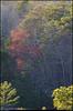 """(14Mar11)  spring foliage.  <a href=""""http://carpelumen.smugmug.com/Photography/2010/March10/11394055_8VU6F/2/810021960_24Qie/Medium"""">one year ago.</a>  f/11, 1/125s, iso 2500."""