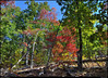 """(26Oct11)  dead wood and autumn leaves, sawnee mountain.  <a href=""""http://carpelumen.smugmug.com/Photography/2010/October10/14009781_NbLGdN/1/1065308138_tQZ4P/Medium"""">one year ago.</a>  f/11, 1/160s, iso 640."""