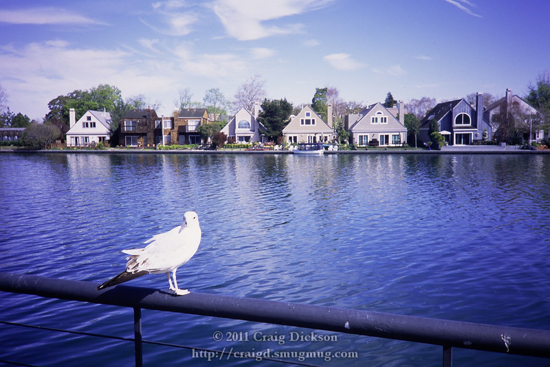 The XA's aperture-priority auto-exposure generally works very well, but it overexposed this seagull