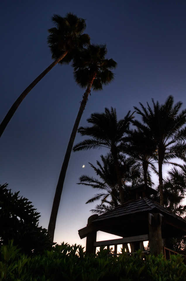 There's nothing like the first night of a vacation. (This was a few weeks ago)<br /> After traveling all day and checking into the room, I took a quick walk to a market for provisions (a drink containing agave ingredients).  Of course, I brought my camera. Along the walk, I snapped a bracket of these palms.  It was pretty windy so this is a lightened version of the fastest shutter shot in the bracket. <br /> <br /> Thanks for looking!