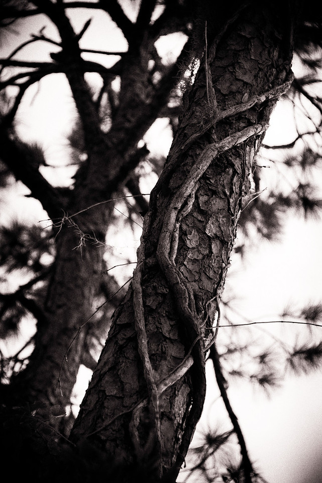 Mother Earth's Veins