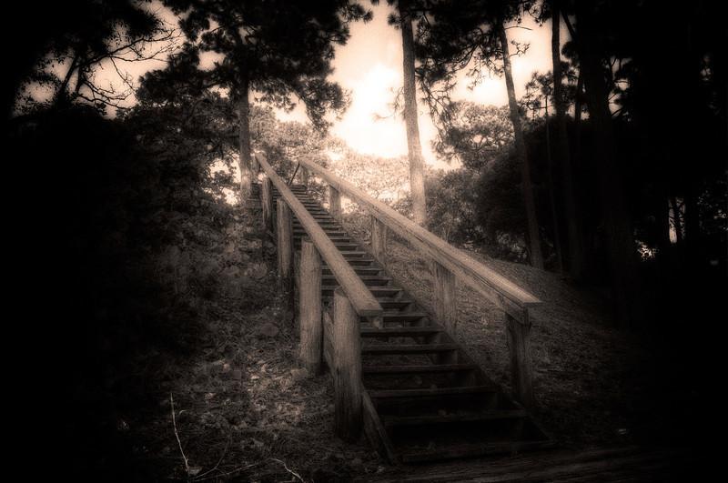 The De-Evolutionary Ladder