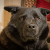 Our Dog (10/10/2012)<br /> His name is Cody and he is a mix of Black lab and Chow. <br /> Have a great day!<br /> -Bob